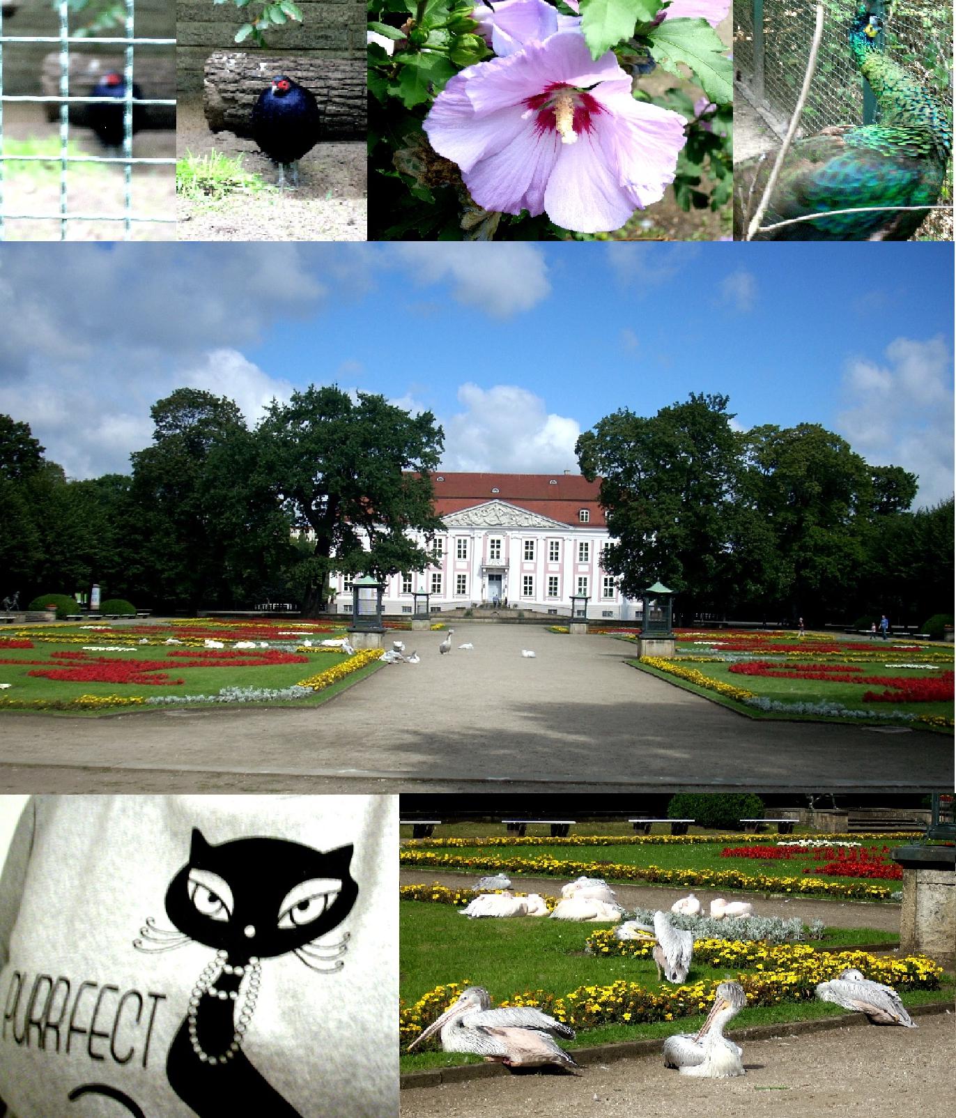 Tierpark Berlin Collage